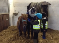 Lots of learning about horses with the Sunflower Team